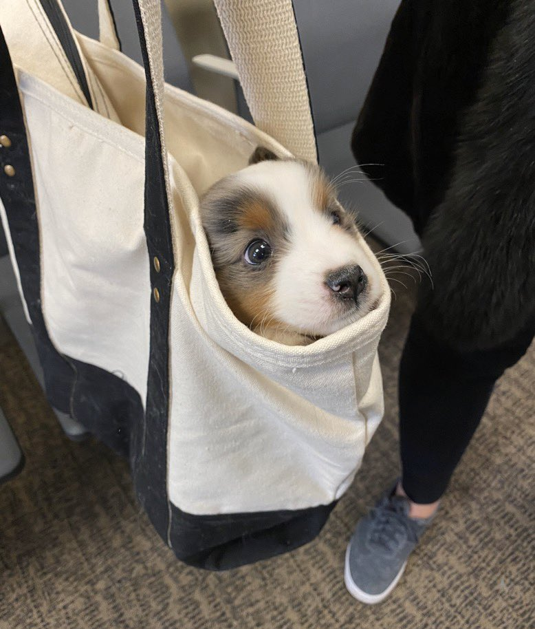 This is Pepper. She thinks the world is a little scary. Plans to stay in her bag for a bit. 12/10 would ask if there's room in there for one more