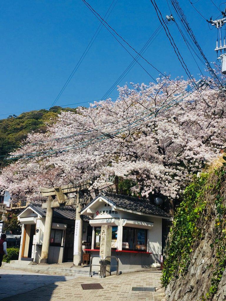 test ツイッターメディア - @Paparazzi_Panic 北野天満宮の桜が満開🌸 https://t.co/kTRClXRJlR