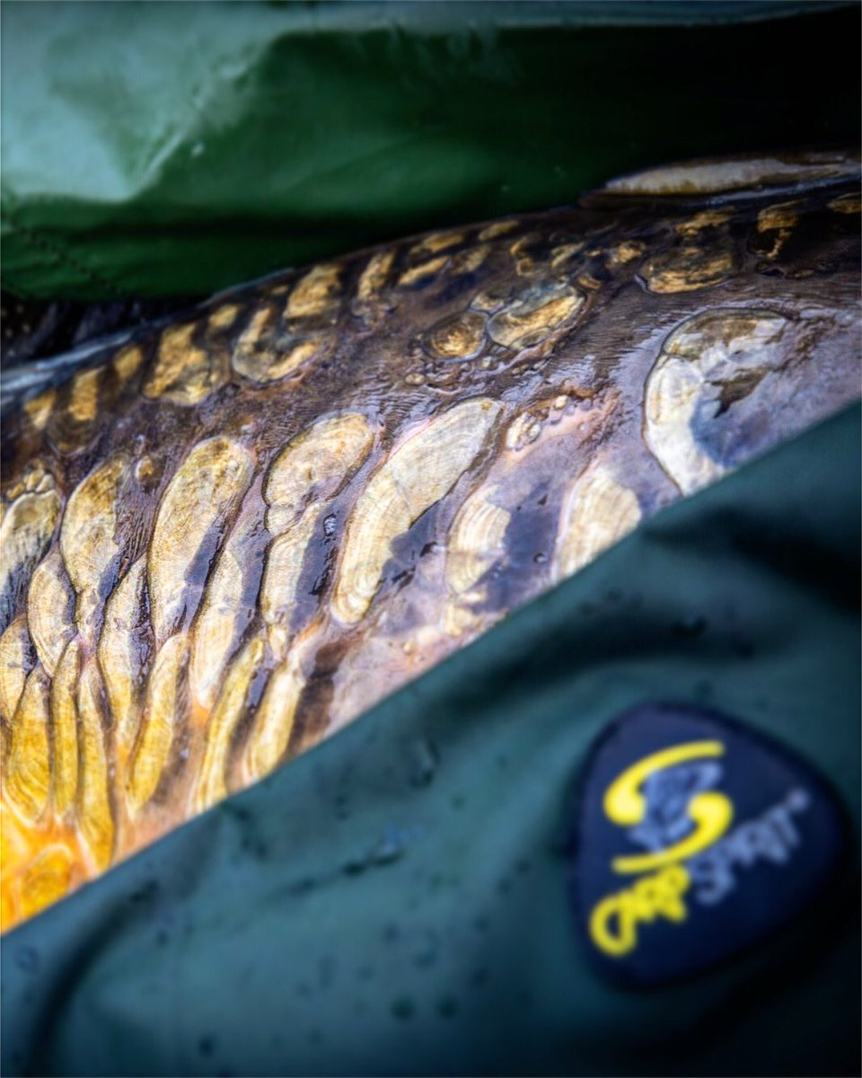Details.... #carpfishing #<b>Karpervissen</b> @carpspirit https://t.co/1AHGODGNWk