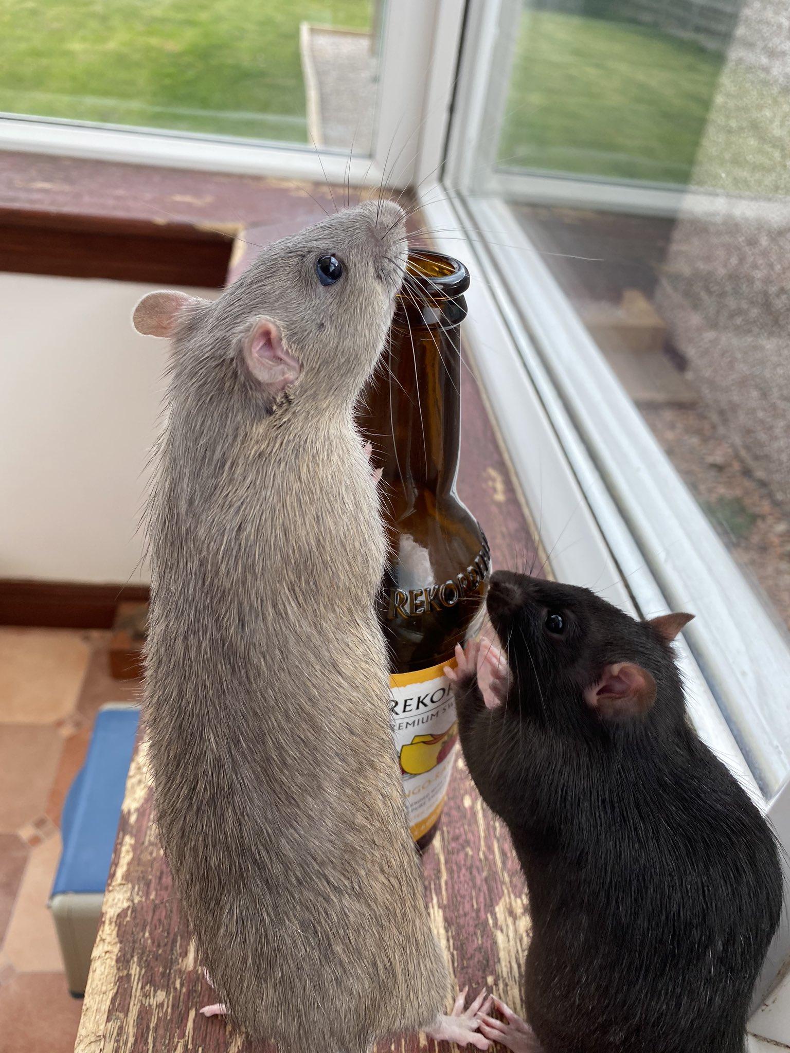 Rat Fancy - cover