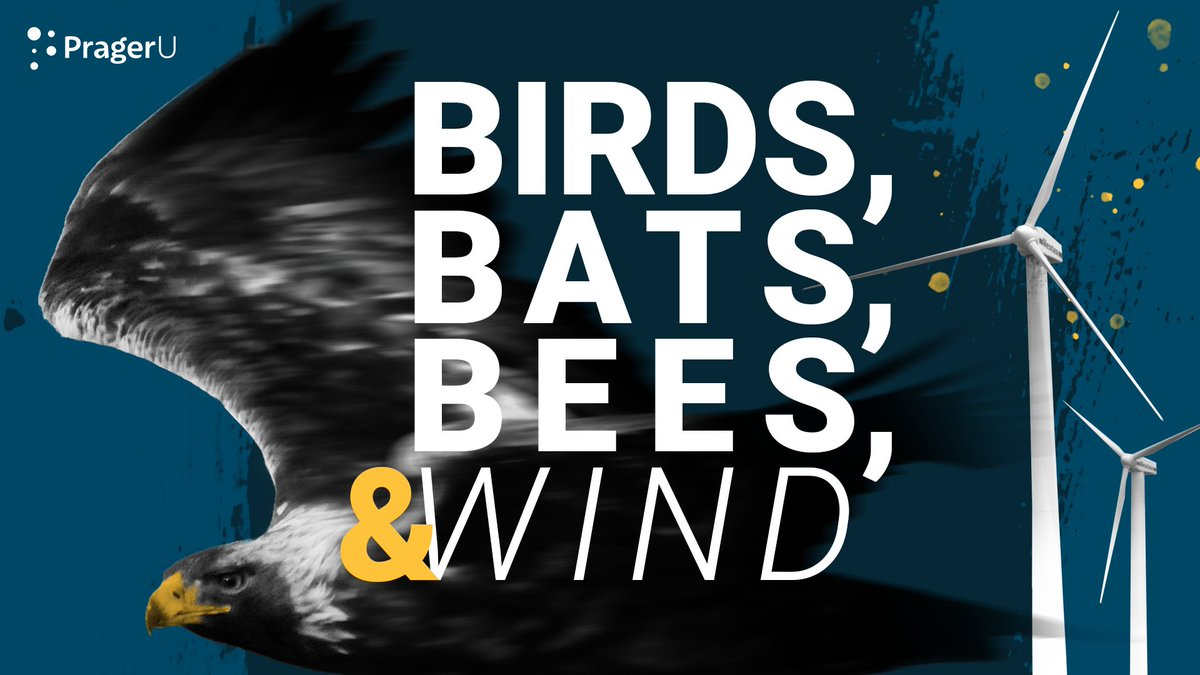 Wind turbines are killing:  Golden eagles  Bald eagles  Burrowing owls  Migratory bats  Wind turbines also highly impact the insect population, which birds depend on.  However, the wind industry blows smoke at the issue.  Is this slaughter really environmentally friendly?