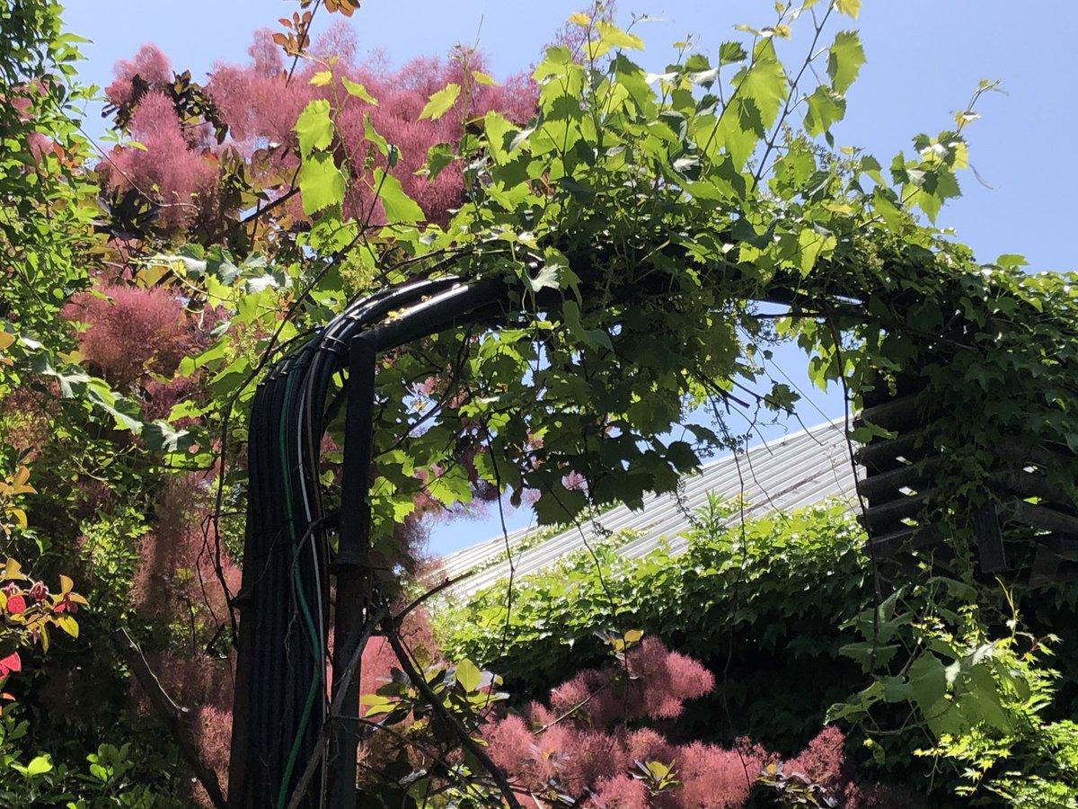 test ツイッターメディア - テイクアウトランチと 限定ビールを購入しに 熊澤酒造さんへ  緑が一杯の庭は 光で溢れていて 待っている間も 幸せな気分になりました  出来たて熱々BLTサンドと グアバジュース🍹 美味し過ぎて最高でした  ご馳走さまでした  #おはよう #湘南ビール https://t.co/wxEMuqukVY