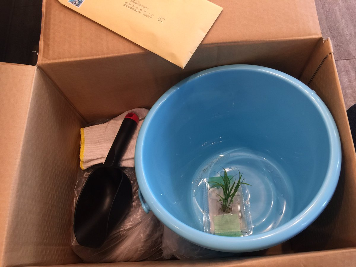 "test ツイッターメディア - ""越神楽"" 苗が届きました。 バケツで苗を育てる 新潟柏崎の阿部酒造さんの新プロジェクト『STAY米HOME』に参加しました。 今日土作りをしました。 明日田植えします。脱落しないように頑張ります!  #STAY米HOME #阿部酒造 https://t.co/N4L2szQZ4W"