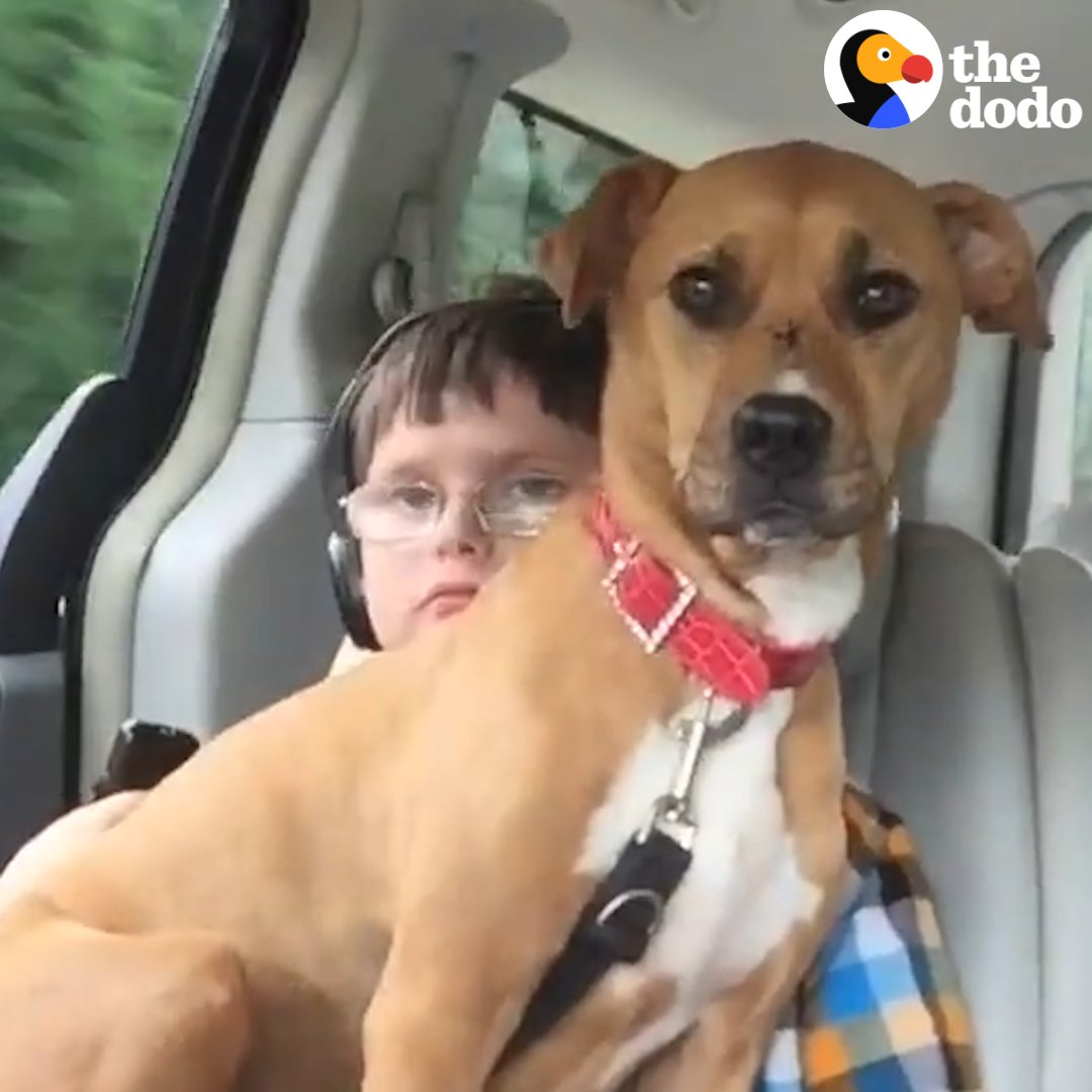 Rescue pittie helps her brother start talking ❤️️
