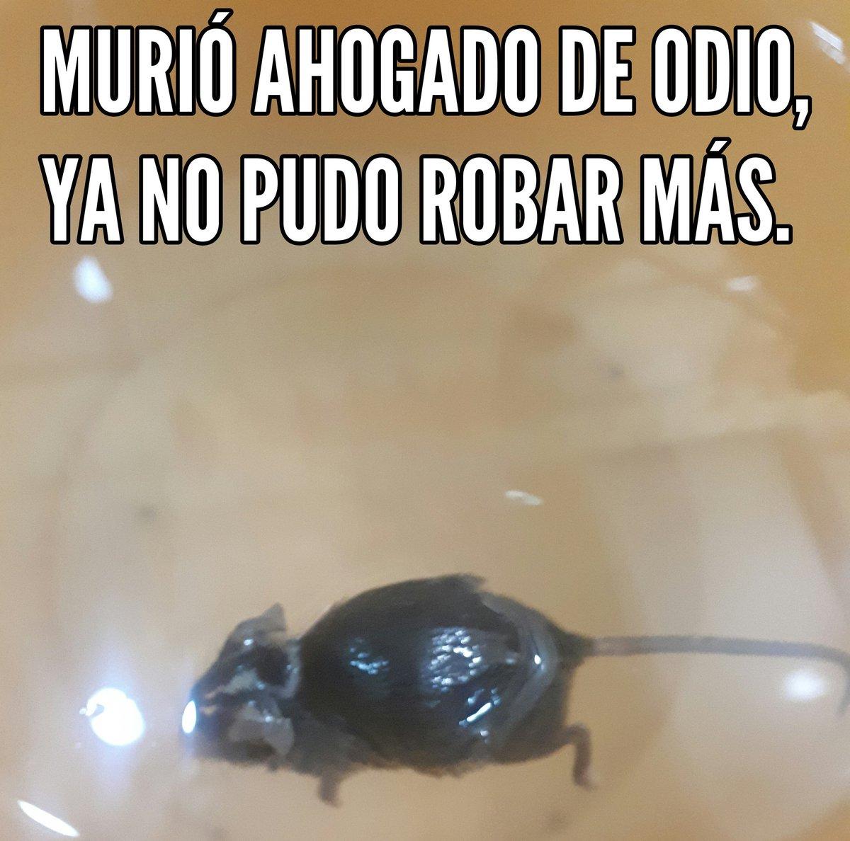 Un minuto de silencio para esas ratas que no pueden robar al pueblo, y están llenos de ardor. #AmloElMejorPresidenteDelMundo Saludos a quienes trabajamos por un México mejor @FabianElDeMich @Tumbapuercoss @TigreChairo @ChairoMexicano @ChemoPonce @AlExCoL1201 @JORGEMA05532111