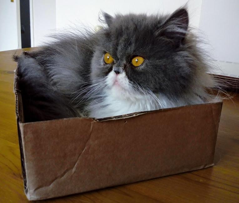 Tiz me Luna... #CatsOfTwitter #catboxsunday #cats