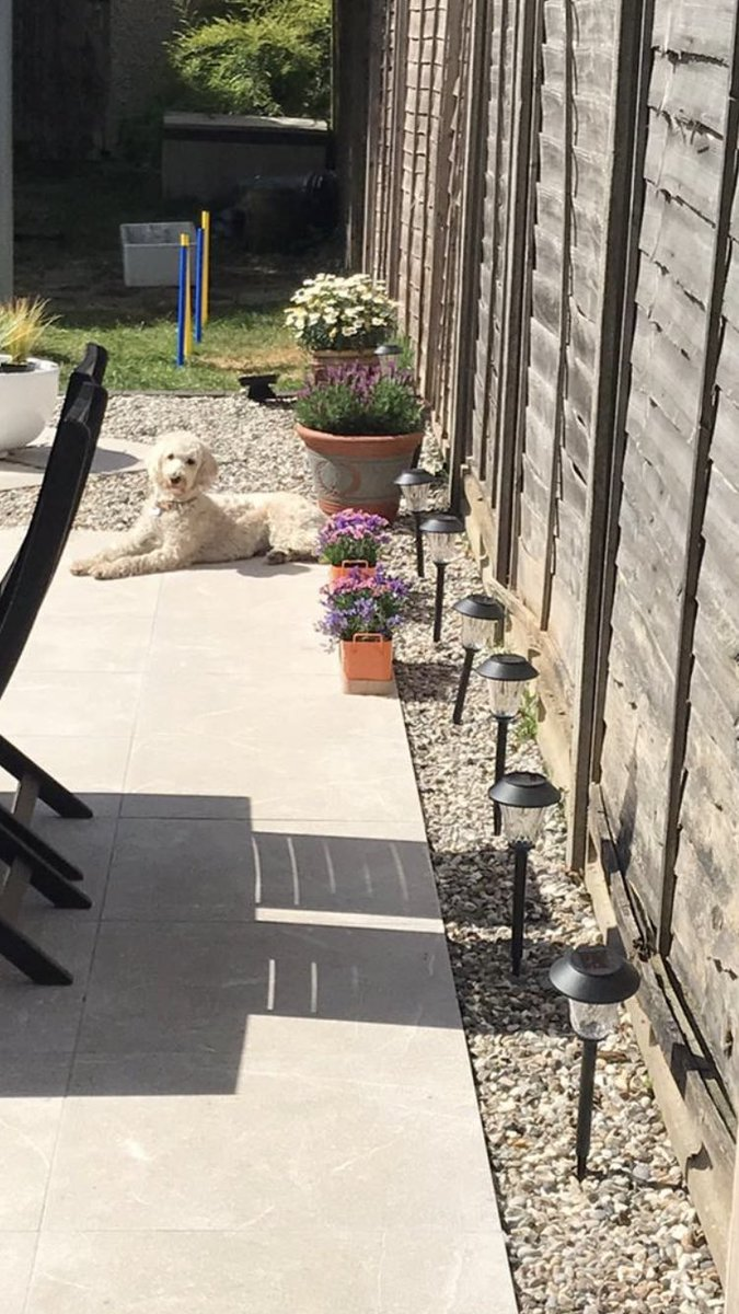 test Twitter Media - Daisy is sunbathing today.🐾🐾 https://t.co/QtChaIbnNI