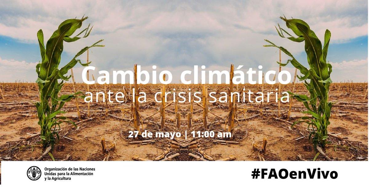 La crisis de la #COVID19 ha puesto de relieve la importancia de conservar y utilizar de manera sostenible los recursos naturales, reconociendo que la salud de las personas está vinculada a la salud de los ecosistemas  #FAOenVivo 🚨Hoy ⏰11:00 am 🖥️