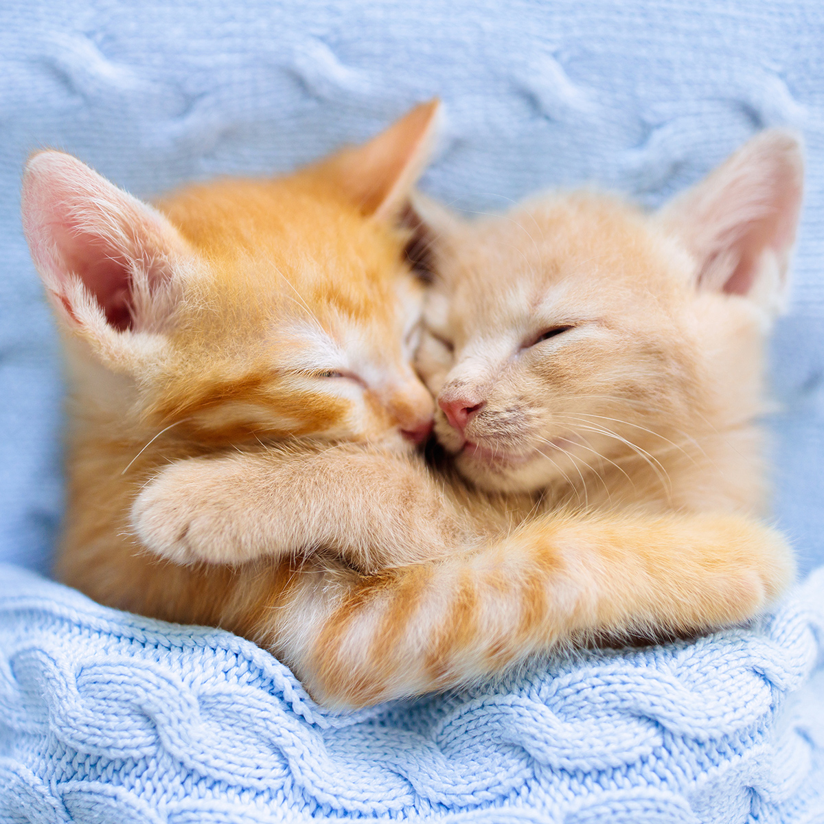 Happy International Hug Your Cat Day! Hug your cat(s) immediately and kiss their claws to honor them on this very special day. #Caturday