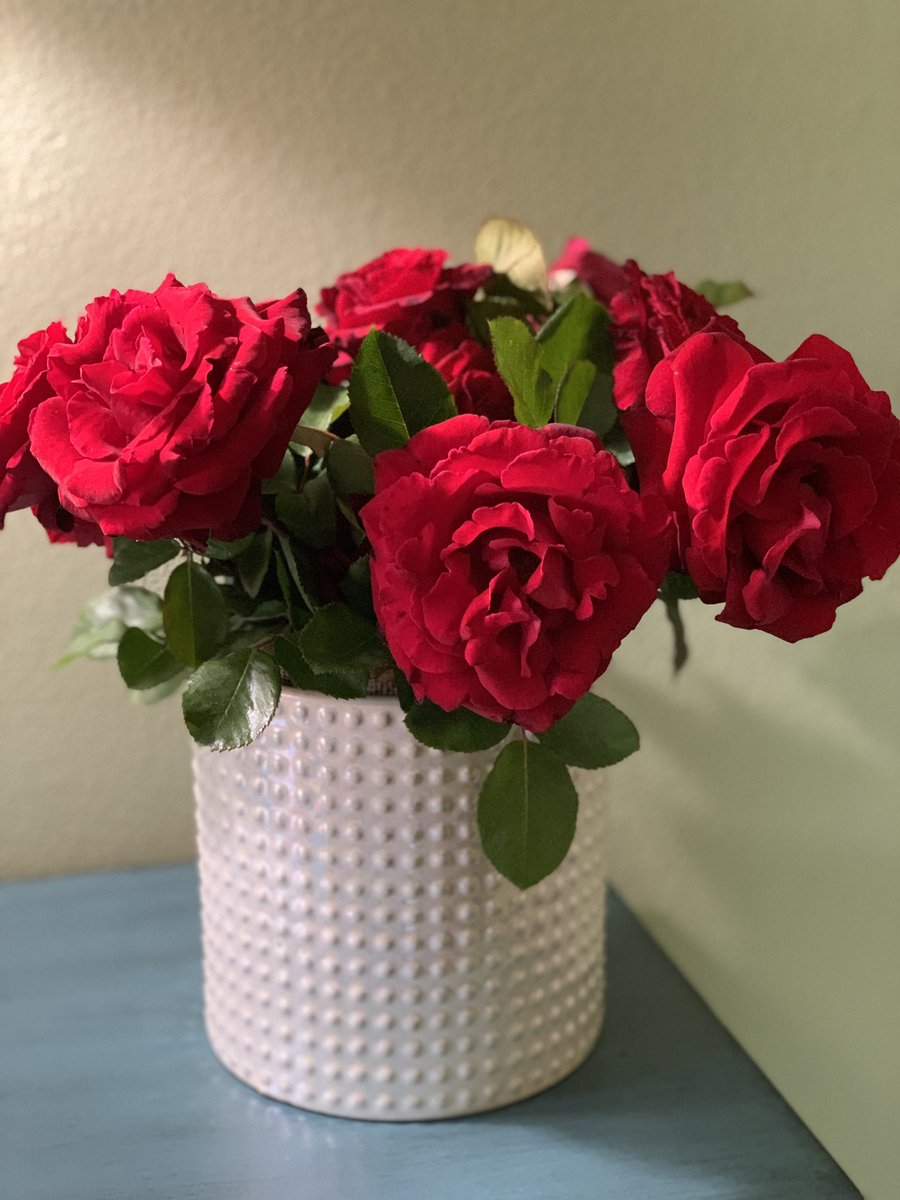 What's prettier than a bouquet of roses that make your room smell amazing... ❤️