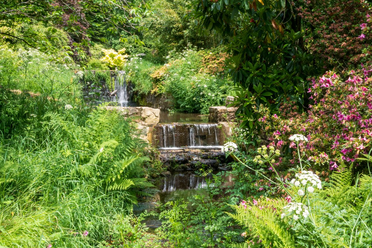 test Twitter Media - Cool, clear, water from Dartmoor meanders through Lukesland Garden before joining the River Erme. The gentle babbling brook a perfect soundtrack to accompany the wildlife who have made this paradise their home.  #Ivybridge #River #Dartmoor #Photography https://t.co/oy65BcVl8U