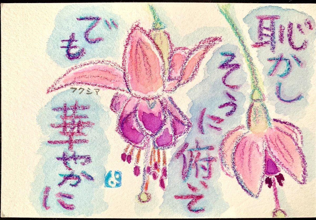 test ツイッターメディア - #あさイチ #フクシア #絵手紙  フクシアの花大好きです。 あさイチで今日やってたので また、欲しくなっちゃった。 https://t.co/oaTOjA6bki