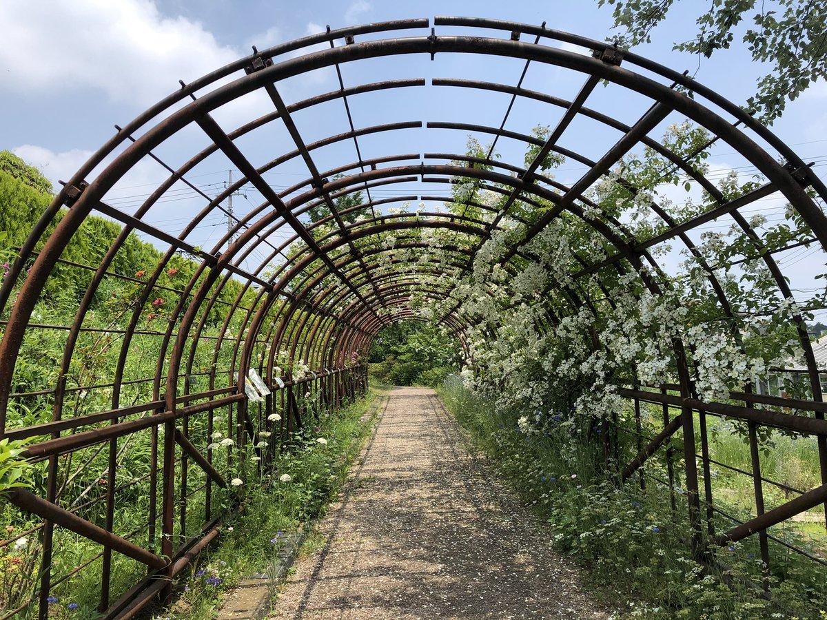 test ツイッターメディア - 🌿メディカルハーブガーデン🌿 昨年、あさイチにて放送された場所へ来ました😊💕園内はとても広くて色々なお花や薬草がいっぱい🌹🌼🍀 暑いけど楽しみます😍✨ *✲゚*(❁´ ︶ `❁)*✲゚* https://t.co/b6mCq1pm99
