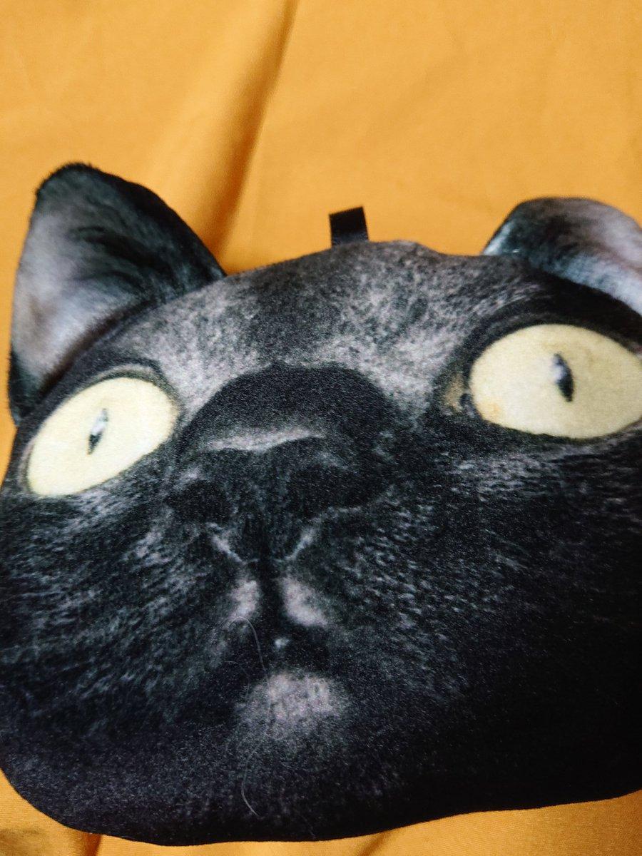 """test ツイッターメディア - 画像を見てビビったかた、すみません ホラーではないです 全国のOLさんやヤンママから熱い支持を受けているフェリシモ猫部 「リラックスすると""""虚無""""になる猫ごまちゃん虚無フェイスポーチ」 です!実物は小さくリアル感を重視のため物はほとんど入りません でもいい 超かわいいから‼️(……) https://t.co/hldRuK3XHh"""