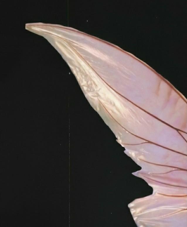 Fairy Jisoo 🧚♀️