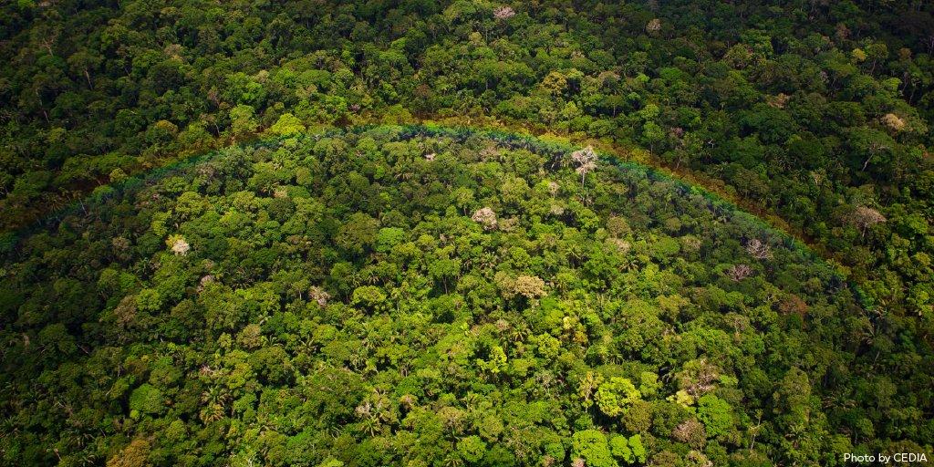 June 22 is #WorldRainforestDay! 🌳 🦋 🐘   Rainforests are home to millions of species and play a crucial role in regulating our climate. But continuing destruction and deforestation threaten our whole planet. Make your gift to protect rainforests now:
