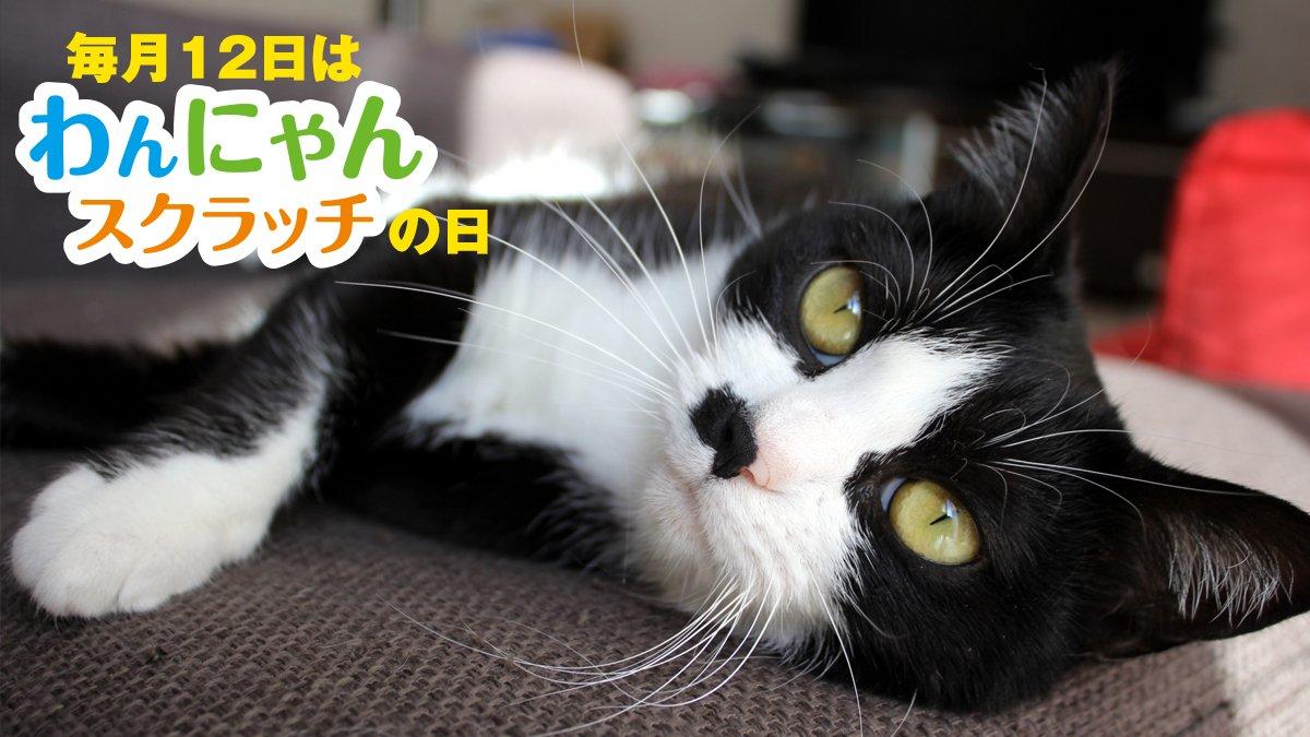 test ツイッターメディア - / 毎月12日は、 #わんにゃんスクラッチ の日 \  八割れのネコちゃんは、末広がりの「八」から、 福猫とされることもあるそうです。 あなたのおうちのネコちゃんが幸運を呼び込んでくれるかも!?  八割れのネコちゃんを飼っている方は コメント欄で教えてください!  https://t.co/mdLXKP33zH #宝くじ https://t.co/CdBzSnLaCk