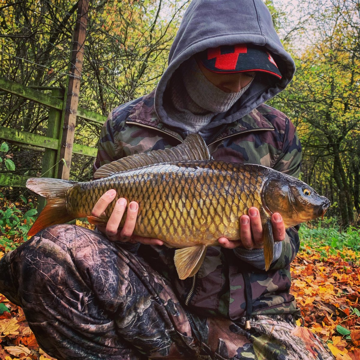 Nice little common with autumnal scenes #carpy #carp #korda #carpfishing #fishing @MainlineBaits @Ko