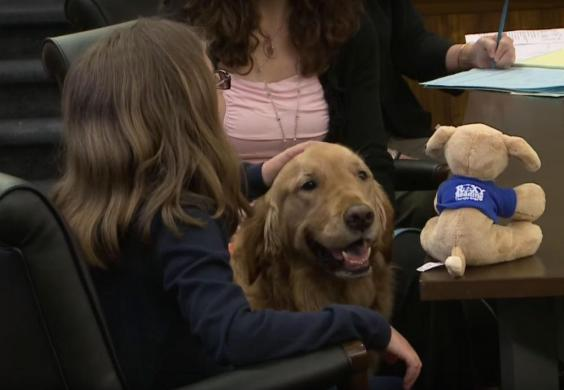 These dogs work in courtrooms to comfort victims of abuse.