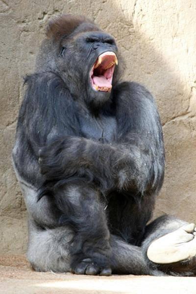 test ツイッターメディア - @master4480 う…腕が外れましたー❗️ マスターさんは的確に猿の面白画像持ってこれるのが毎回すごいです笑笑 https://t.co/mOqgFtuSAk