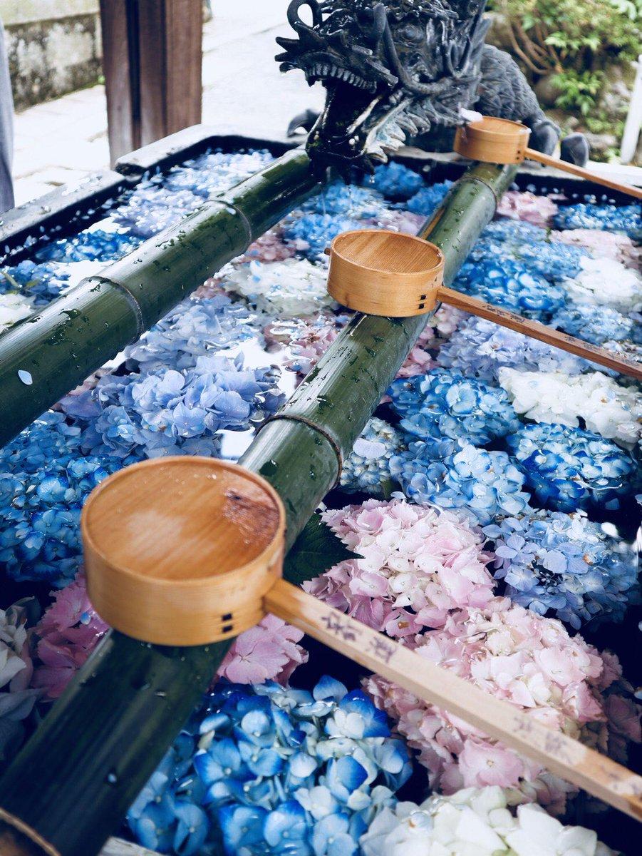test ツイッターメディア - 京都人の密かな愉しみ、ですね。大好きな作品です。柳谷観音さんの花手水は本当に美しいです。わたしは去年足を運ばせていただきました。 https://t.co/UxWz90fzGk https://t.co/852Rt0XmT5