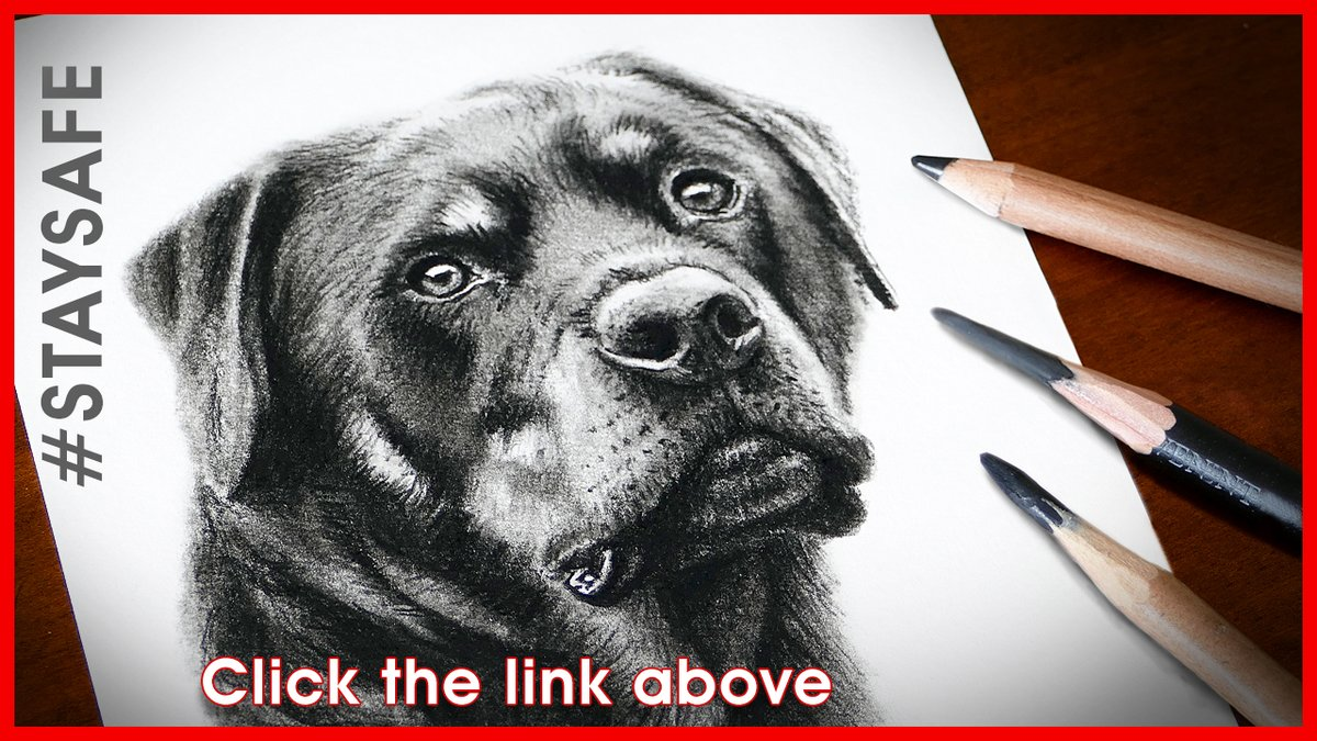 New video - Rottweiler Portrait... CLICK HERE...  . . #Rottweiler #Rotty #DogPortrait #PortraitArtist #PetArtist #ArtistMatthewHarvey #MHFineArt #StaySafe #HowToDraw #HowToPaint #BuyArt #ArtCollector #Art #FineArt #Artist #DogArt #WildlifeArtist  #Dog