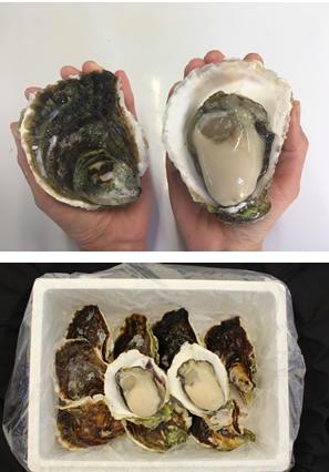 test ツイッターメディア - https://t.co/srWFacsrEPを知っていますか? 長崎の県産品を販売しているサイトです なんと今!3割引&送料無料で販売されています‼️ 私は先ほど購入したら3つで6600円値引きでした☺️  🌊長崎県民オススメ🌊 1.五島列島の岩牡蠣 2.茂木びわゼリー 3.福砂屋の五三焼きカステラ 4.梅のやの干物セット https://t.co/MFts9TvO2O