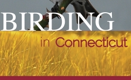 test Twitter Media - Birding tips from Frank Gallo, author of 'Birding in Connecticut.' Order here using code Q301 for 30% off: https://t.co/pH4BIgB7w2 https://t.co/5GJMfNfyHB