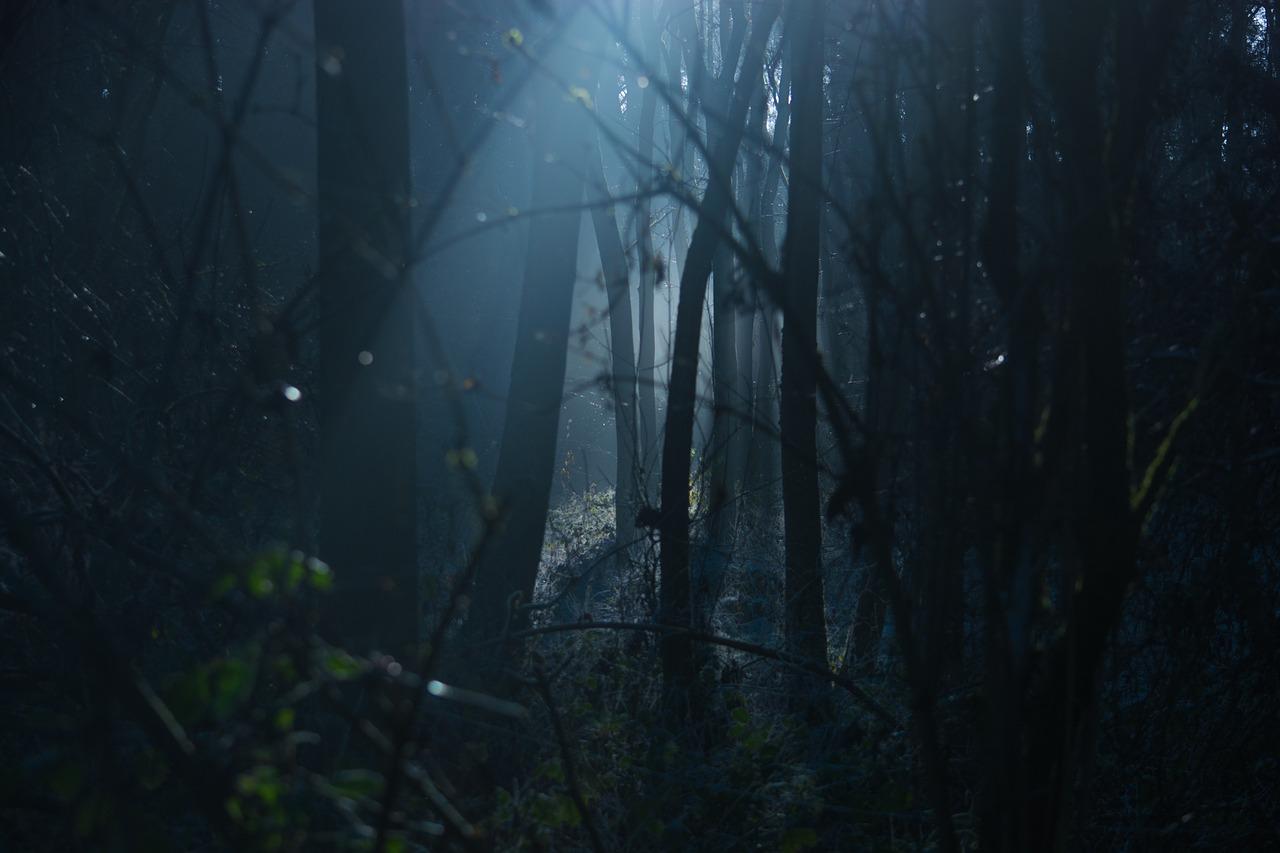 nuit forêt