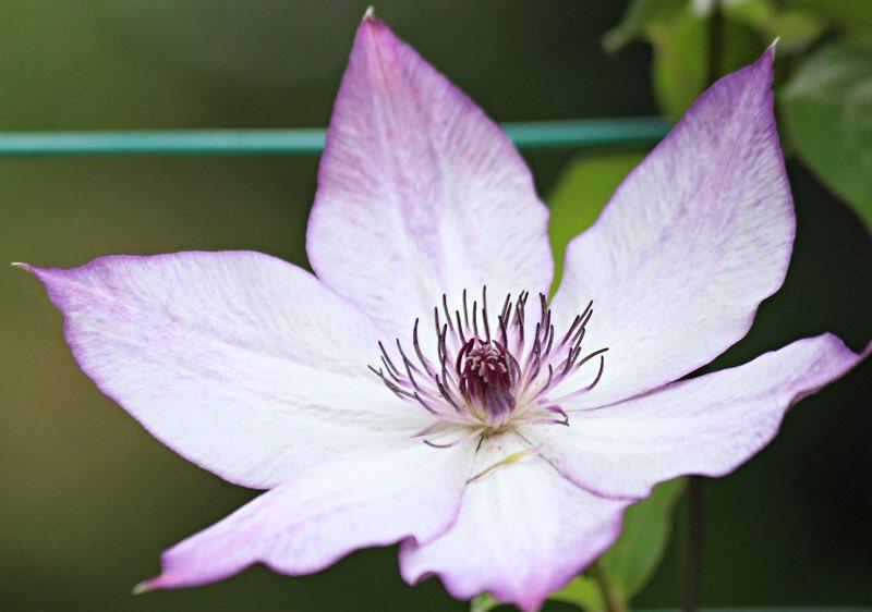 自然に癒されたい  「   おはようございます        今日も一日雨のよう         #頑張ろう日本        #お家で過ごそう              #マスクをしよう^_^ 」  #写真好き #自然 #盆栽 #癒し #花 #人気ツイッター #筆文字