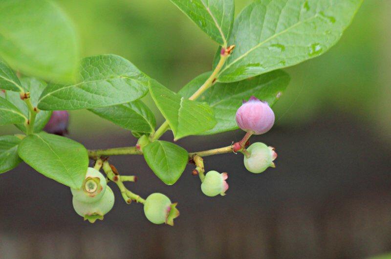 自然に癒されたい  「   #3密を守ろう        #医療従事者にエールを          #頑張ろう日本        #お家で過ごそう              #マスクをしよう^_^ 」  #写真好き #自然 #盆栽 #癒し #花 #人気ツイッター #筆文字