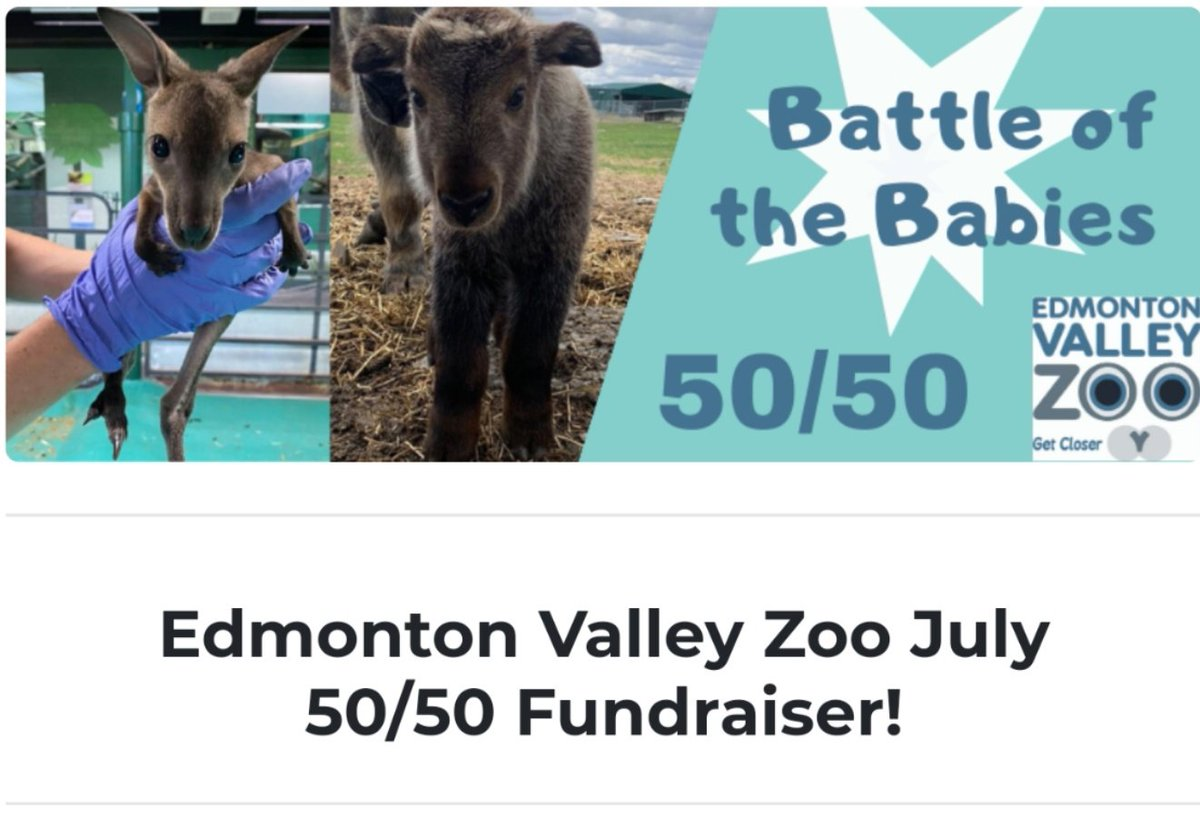 🥊 It's a close race in our Battle of the Babies 50/50! 👶  The jackpot is currently at $2,240, so give these babies a good start into their journey.  Visit  to purchase tickets. #yeg #yegzoo
