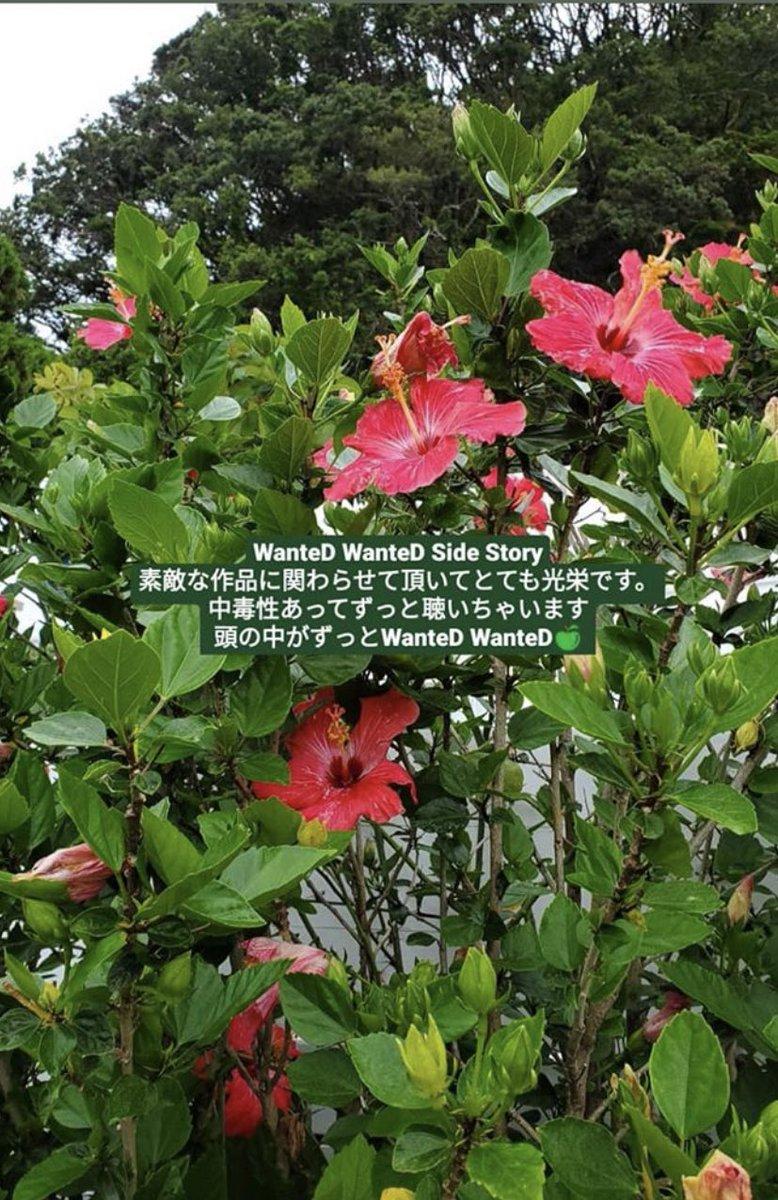 test ツイッターメディア - まおまおさんのインスタ。  この花の意味は…。  #平手友梨奈 #ミセスグリーンアップル https://t.co/B0o7wxkWpN