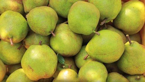 test ツイッターメディア - \本日は #梨の日🍐/  菓匠三全の #らふらんす は、雄大な自然の中で育くまれた西洋梨「ラ・フランス」の果実を贅沢に使用しております。追熟で生まれる気品ある味わいが 好評です。  https://t.co/L8EUZYOxcu https://t.co/QJMTRH7pGN