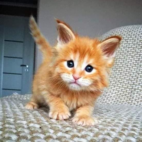 Olha o crescimento desse gatinho que coisa mais linda