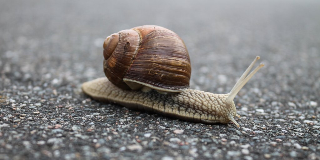 test Twitter Media - Is your broadband as slow as a snail? Grants of up to £7,000 are available to SMEs in rural areas of Cumbria that suffer from slow broadband connections. The aim is to ensure businesses have access to download speeds of at least 30Mbps. https://t.co/Rbcrfomxx2 https://t.co/XteTqaafNF