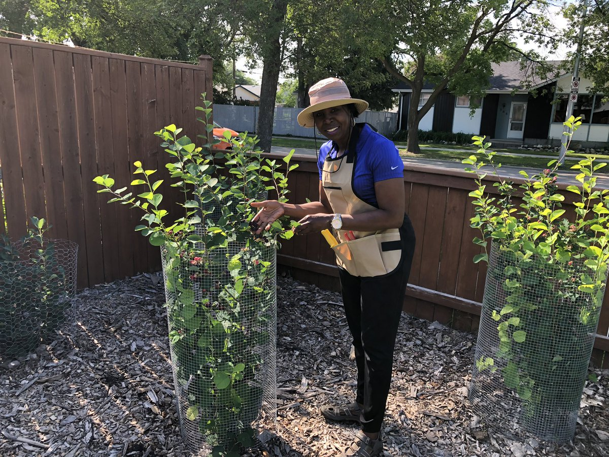 test Twitter Media - Great start to the week! A garden tour in Windsor Park with rows & rows of vegetables, MB wildflowers and Saskatoon Berries and more. To my surprise, the homeowners are also local artists! #garden_walk #pottery #artists https://t.co/lWezuLbhwu