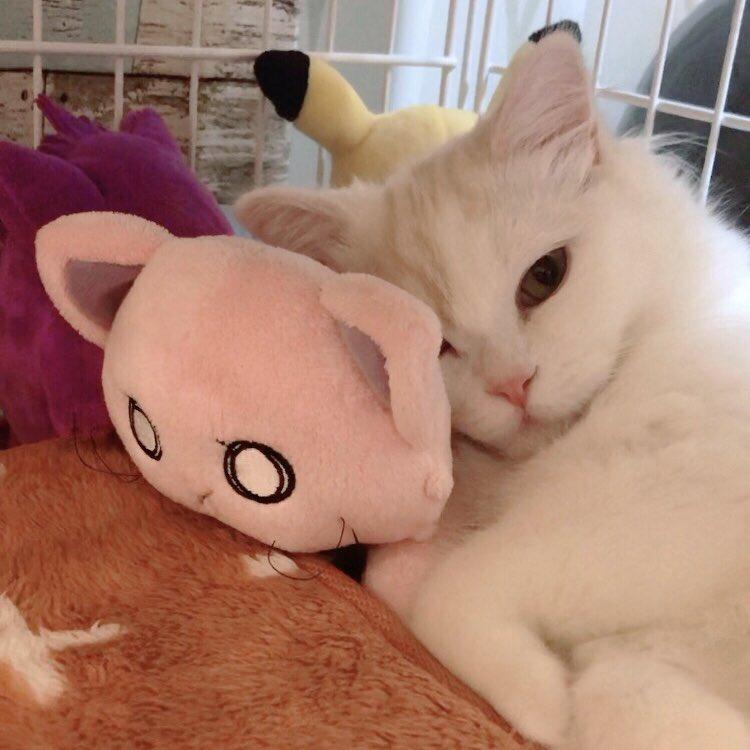 test ツイッターメディア - 猫がネコを枕にしておる…!!🐈 #anime_k https://t.co/UqzPsK58pF