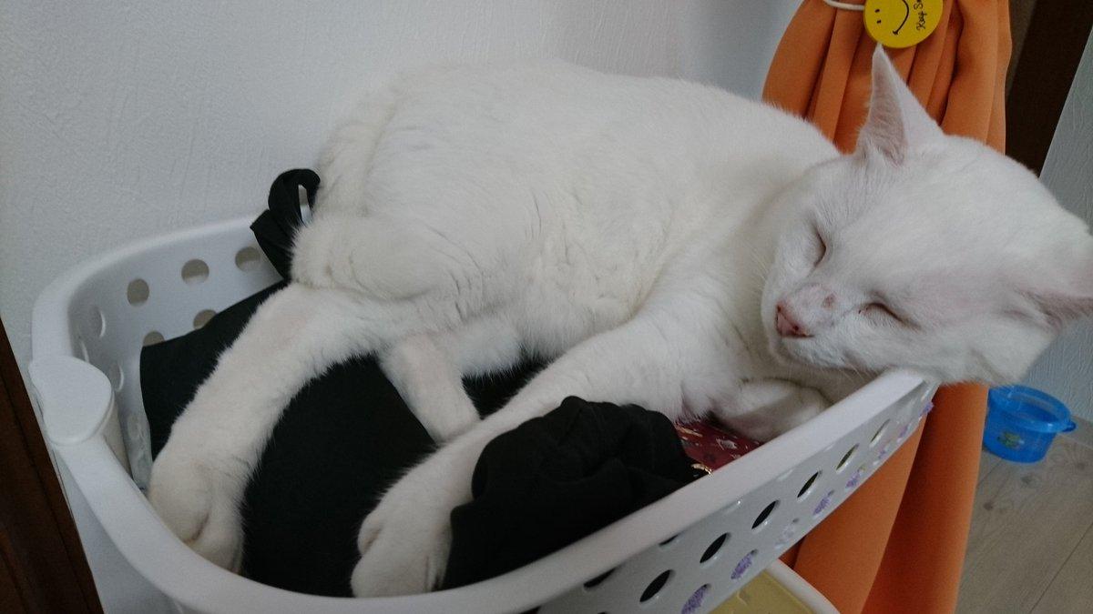 test ツイッターメディア - 当たり前のようにカバンの上で寝る猫 https://t.co/LMKnf3efbg