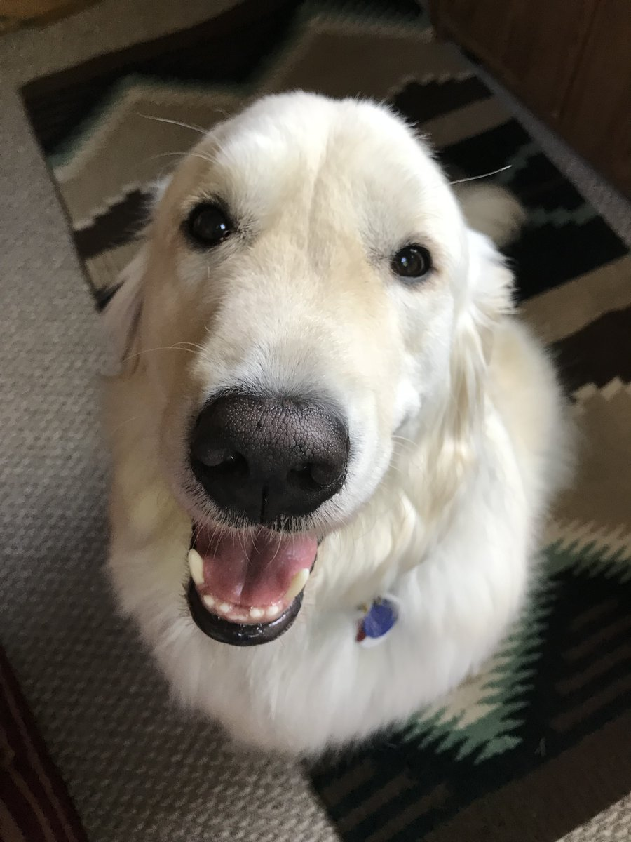 Mom asked me this morning if I loved her. Yes, I woofed! She asked me how I know. I thought - the world is perfect when I am with you and my happy happens. My heart just tells me so.   #dogs #love #happy #FridayFeeling