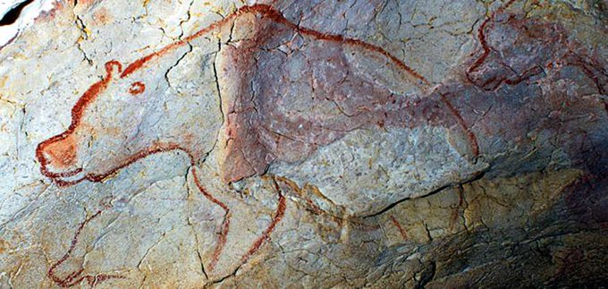 The artist who painted the 3 bears in the Chauvet cave, used a technique known as 'stump-drawing': he/she used his/her fingers to paint the muzzle & to emphasize the outlines of the head & forequarters; a primitive form of perspective used 30,000 years ago
