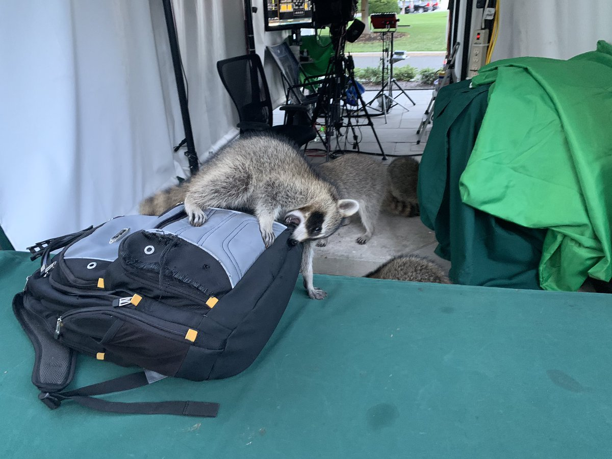 👀 Spotted at the White House tonight. As I was live on @washingtonweek this crew wandered out of a bush... 🦝 🦝🦝Photo: Brian Fuss