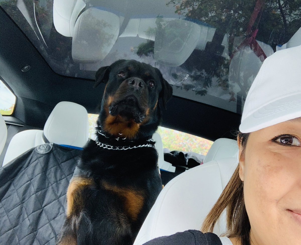 Would be unfortunate for someone to break into my car.. She's on duty 💕☺️ #Rottweiler #Love