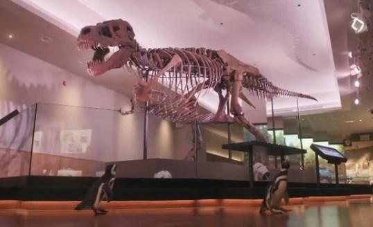 Fechado para humanos, museu abre as portas para pinguins visitarem dinossauros.  @BlogPageNFound