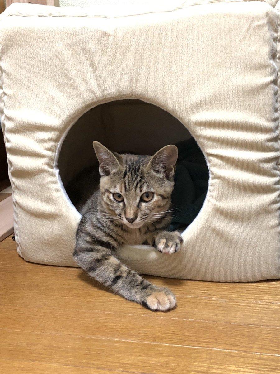 へいらっしゃい!何にいたしやしょう?  #猫 #猫好き #猫好きと繋がりたい #癒し #わかってる #ネコ #ねこ #かわいい #大将 #カウンター