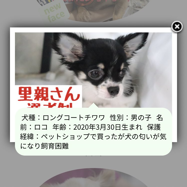 godzilla_cさんのツイート画像