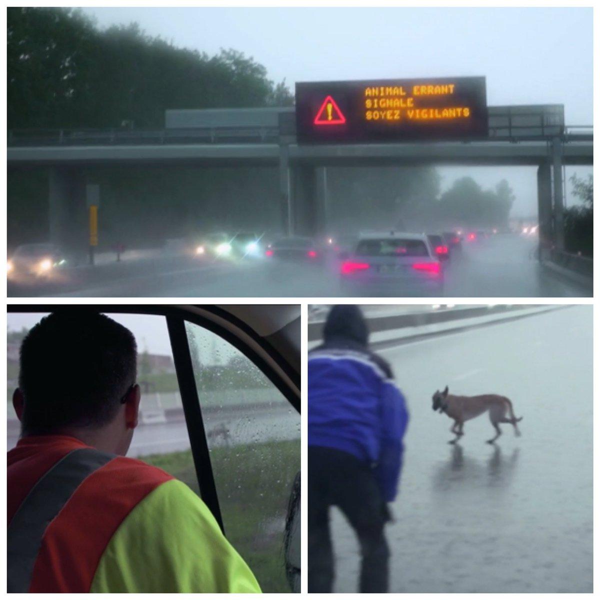 Un #chien errant sur l'autoroute met nos #patrouilleurs et nos clients en danger ! Plus que jamais, #APRR aux côtés de @SPA_Officiel contre l'abandon #aprrcontrelabandon #leshommesdelautoroute