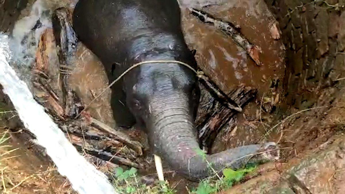 🇮🇳 FLASH - Cet #éléphant, qui était bloqué dans un trou de 7 mètres de profondeur, a été sauvé par des habitants qui ont rempli le fossé d'eau pour faire remonter l'#animal à la surface. (via The Dodo)