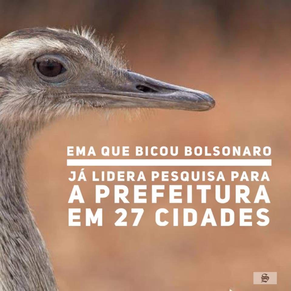 Bolsonaro testou positivo mais uma vez e continua contaminando. Ainda bem que a Ema não foi contaminada. Queria lançar o #lutecomoumaEma