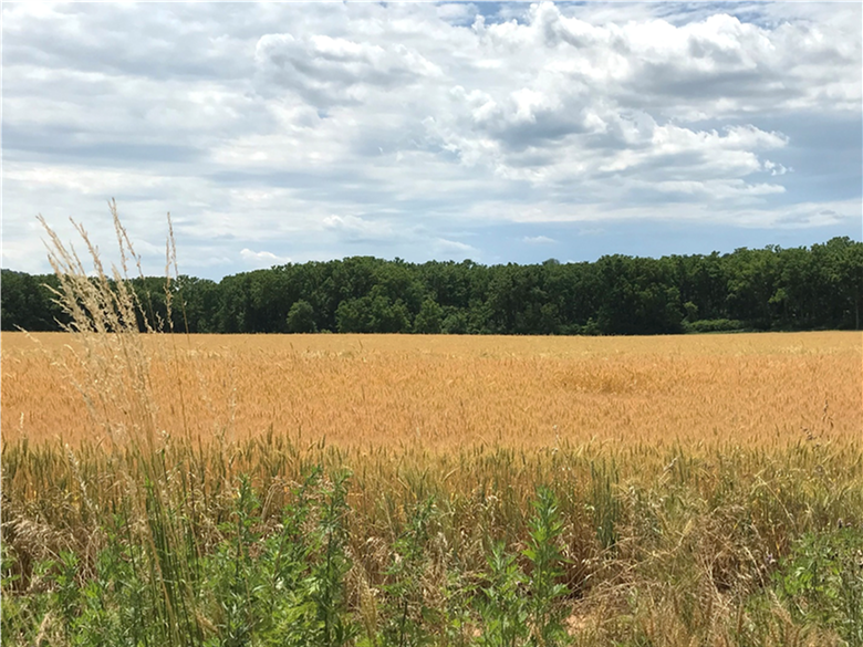 Warren County has preserved its 300th farm, permanently protecting nearly 400 acres in Franklin Township, NJ.  Learn more about the Hart Farm and the county's preservation efforts at the link:
